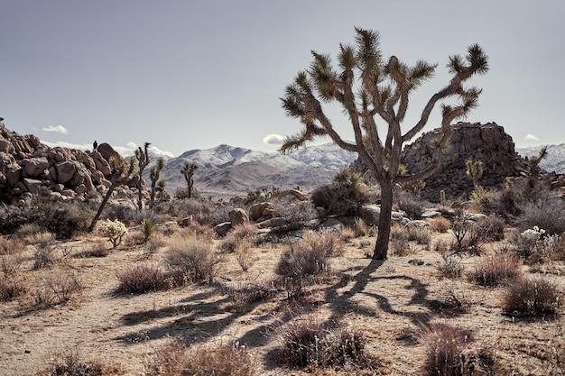 남부 캘리포니아에서 멀리 떨어진 산들과 관목과 나무가있는 사막