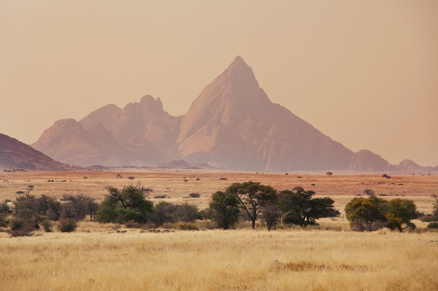 나미비아의 황량한 풍경