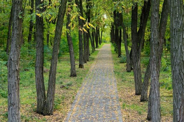 나무 줄기와 무성한 녹색 덤불이 늘어선 아름다운 삼림 지대를 통과하는 황량한 포장 돌 경로