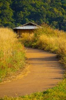 일몰 시간 동안 언덕에 아름다운 도로를 따라 desho 잔디 pennisetum pedicellatum