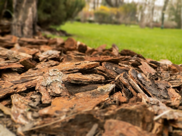 Design design of puddles of mulch from natural pine brown bark closeup mulch is an element of landscape design of plots