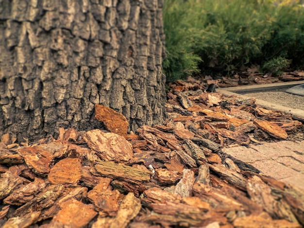 Design of park with mulch from natural pine brown bark closeup pine mulch  element of landscape design of plots