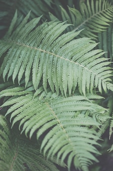 Detail of beautiful green fern in nature