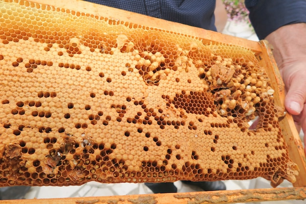 Detail of a beehive parise with honey bee