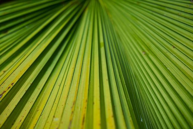 Detail closeup park green texture