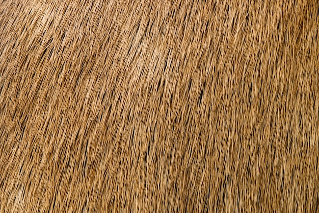 Detail of deer fur