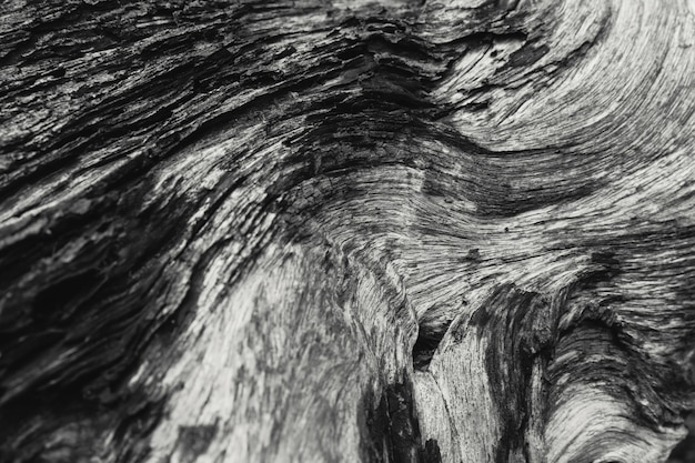Detail of died wood texture black and white nature art photography.