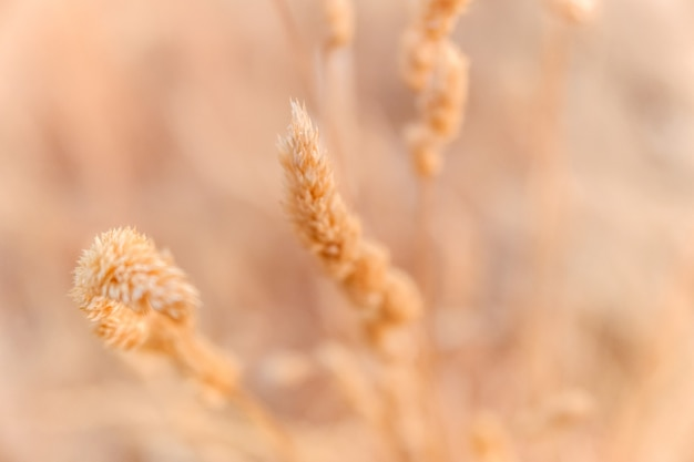 Detail of a dry plant at the end of summer