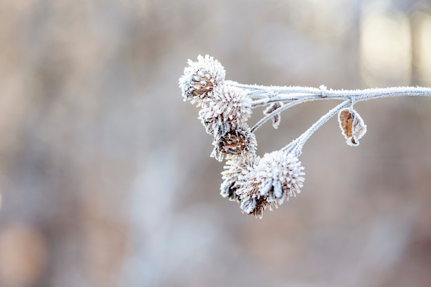 Detail of a frozen shrub on a frosty winter morning