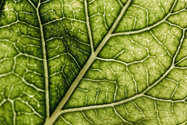 Detail of a green leaf