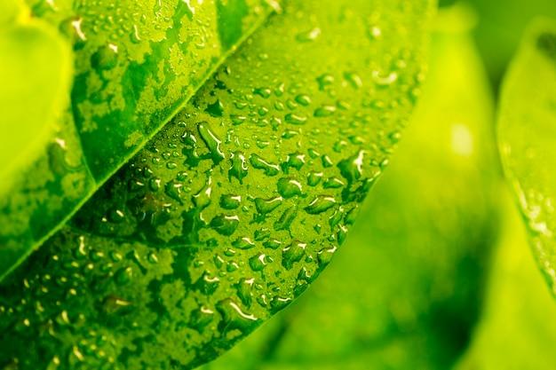 Detail of a green leaf Premium Photo