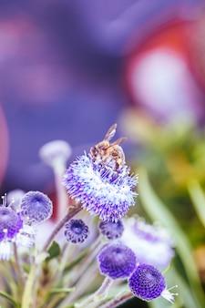 꽃에 꿀벌의 세부 사항
