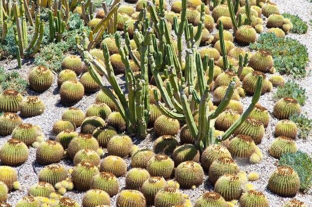 Деталь сада кактусов, полезная также для концепций
