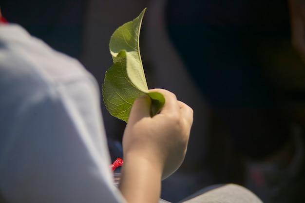 Деталь детской руки, держащей лист в глазах и изучающей ее.