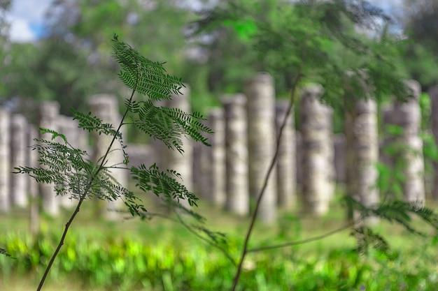 メキシコのユカタン半島で育つシダ植物の詳細