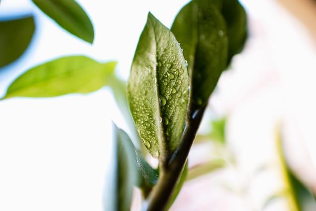 Деталь освежающих капель воды на зеленых листьях.
