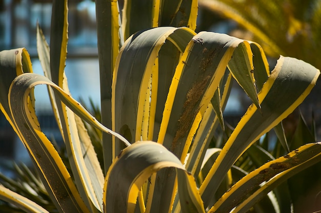 사막 지역의 전형적인 매우 다채롭고 다채로운 기름기 많은 식물의 세부 사항.