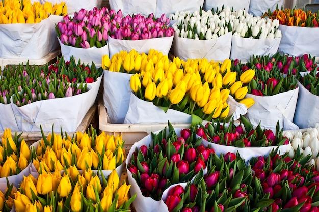 Деталь цветочного рынка амстердама: лучшие тюльпаны мира