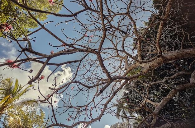 メキシコのチチェンイツァの遺跡を見下ろす青い空に浸る木の裸の枝の詳細