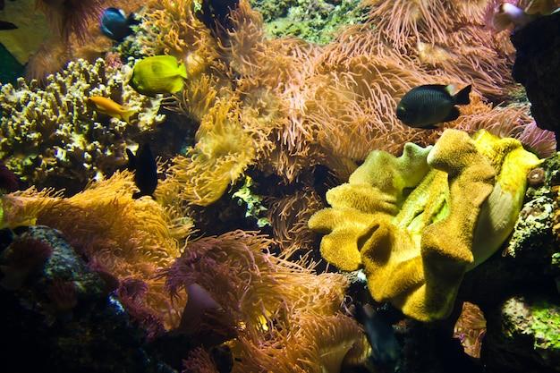 산호초의 세부 사항: 이집트, 홍해