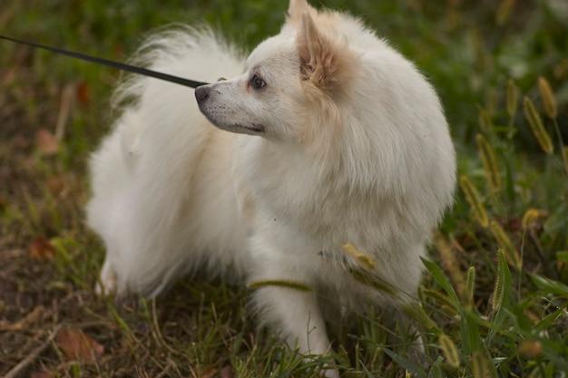 公園の犬の鎖の詳細