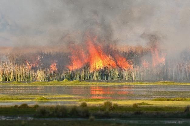 ジュン湖内の葦の火災の詳細
