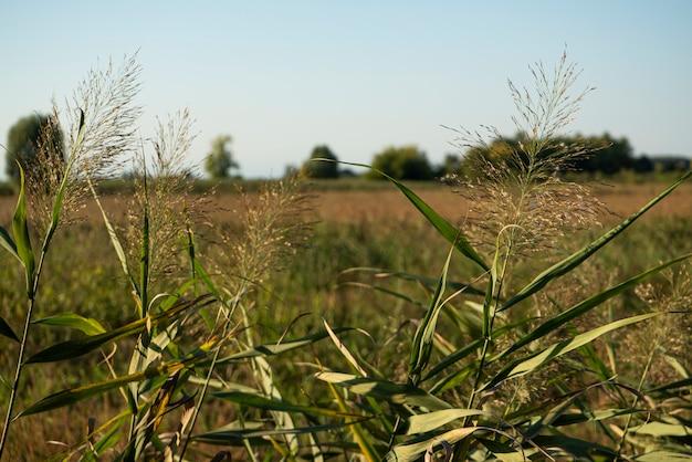 가을 석양에 잔디 도랑의 세부 사항