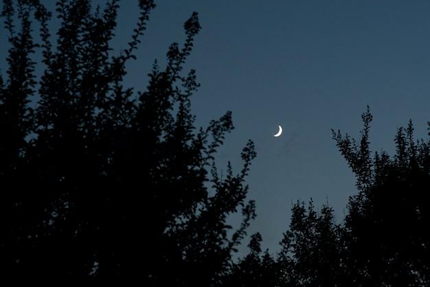 Деталь луны в ночь между ветвями силуэт