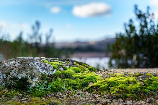 森の中の岩石の苔のディテール