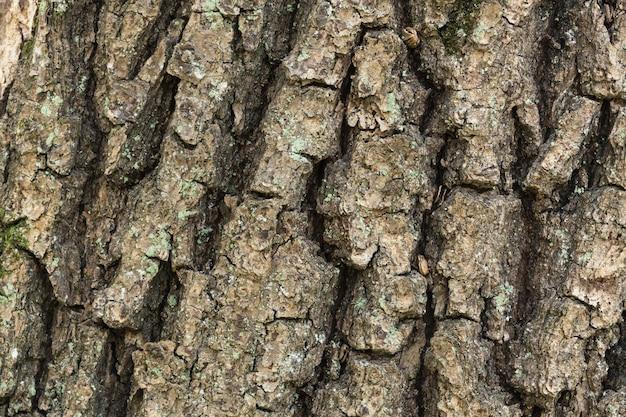 オークの木の樹皮の詳細