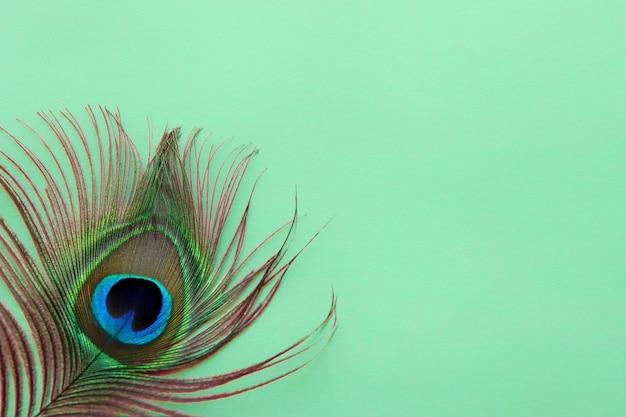 Деталь глаза павлиньего пера на зеленой абстрактной текстуре для обоев павлина синезеленого цвета