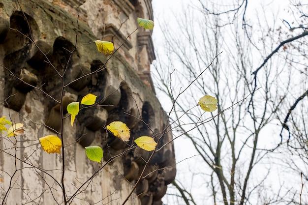 Деталь башни древней крепости в городе острог, украина. поздняя осень. желтые листья на ветвях деревьев