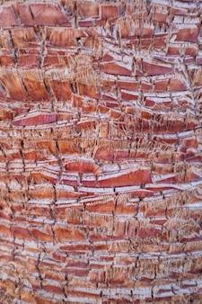 ヤシの木の幹、切り取られた枝、ヤシの木のピンクの幹の詳細。
