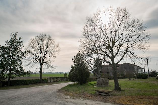 겨울 시즌에 나무와 더러운 길의 세부 사항