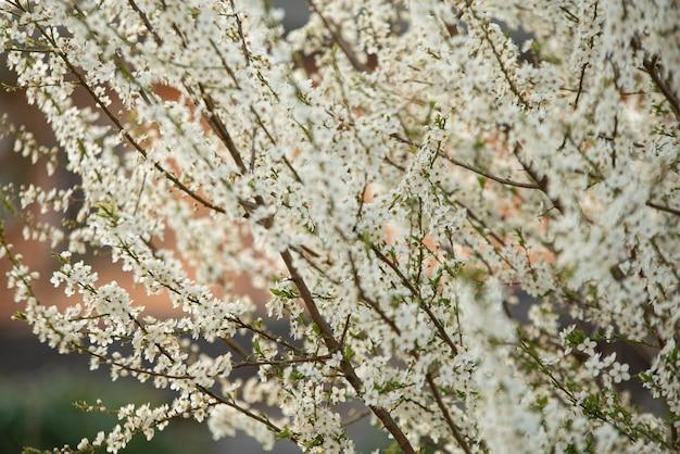 자연에서 봄에 흰 꽃의 세부 사항
