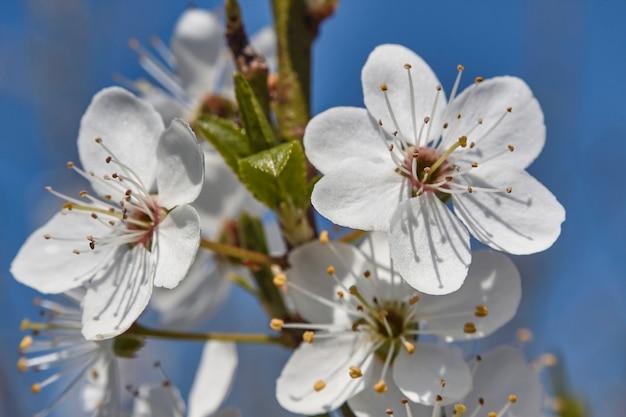 봄에 피는 백도의 디테일