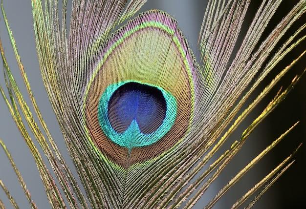 Деталь павлиньи перья