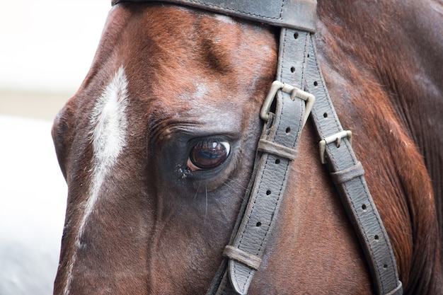 Detail of sad look of brown horse.