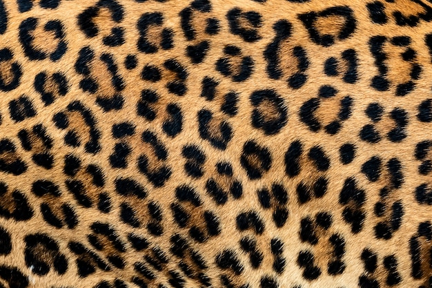 Detail skin of leopard.