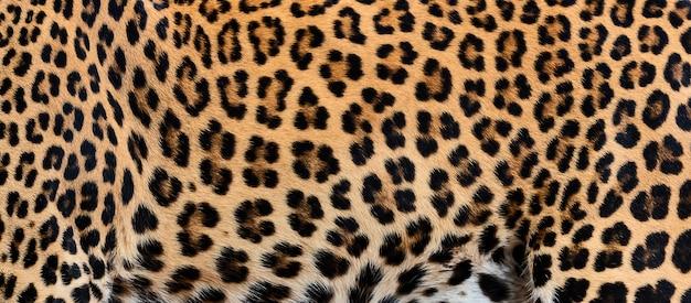 Detail skin of leopard.