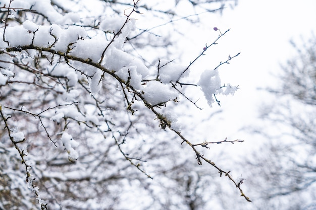 Detail of the snow and ice on the branches of the trees. snow in the town of opakua near vitoria in araba