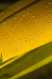 Detail of yellow feather with water drops