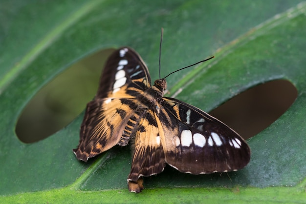 Detailed butterfly in natural habitat