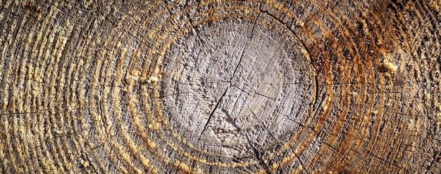 자세한 그래픽 리소스, 갓 잘라 소나무 나무 질감.