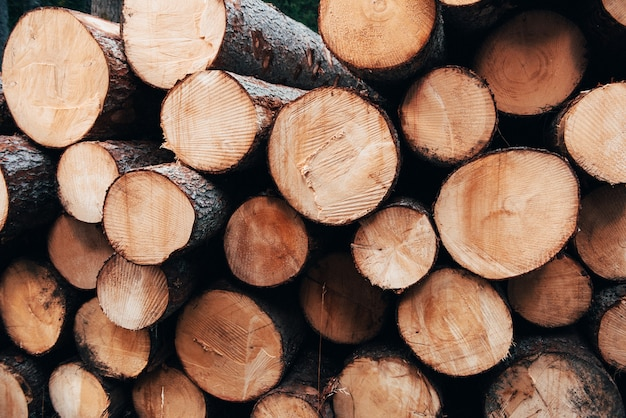 Detailed photo. close up view of the front of many logs prepared for the winter. nature background