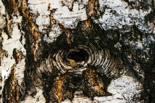 マクロでバーチの樹皮の詳細なテクスチャ。中空のクローズアップと斑点のあるベツラ表面の異常な断片。コピースペースを持つツリーの負傷。美しいレリーフ。