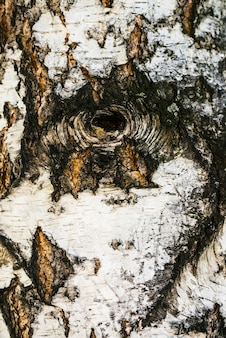 Подробная текстура коры березы в макросе
