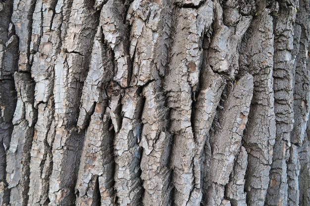 Detailed tree bark texture background