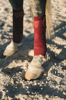 Detailed view of horse hoof in the arena.