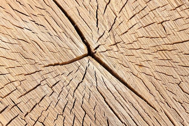 Детали старого треснувшего ствола березы после распиловки на рубку